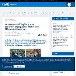 VIDEO - Beauval, la plus grande maternité zoologique de France avec 750 naissances par an
