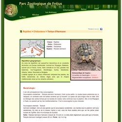 Parc Zoologique de Fréjus : Tortue d'Hermann : Présentation détaillée de l'animal
