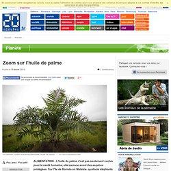 20MINUTES 15/02/13 Zoom sur l'huile de palme