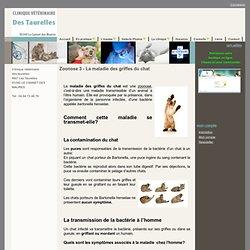 Zoonose 3 - La maladie des griffes du chat - Chat