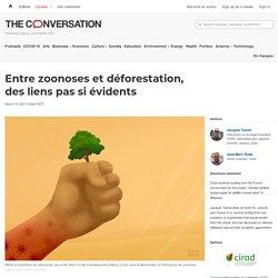 Entre zoonoses et déforestation, des liens pas si évidents