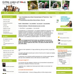 Maladie du chien transmissibles | Pearltrees