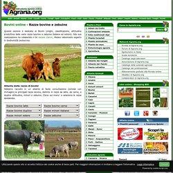 Allevamento di bovini