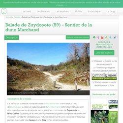 Balade de Zuydcoote (59) - Sentier de la dune Marchand