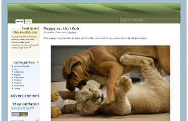 http://files.kavefish.com/pictures/collections/puppy_vs_lion_cub/_index-list.html