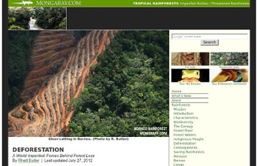 http://rainforests.mongabay.com/0801.htm
