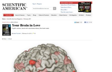 http://www.scientificamerican.com/article.cfm?id=your-brain-in-love-graphsci