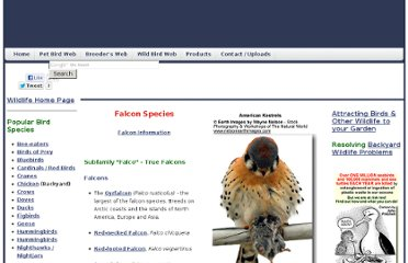 http://www.avianweb.com/falconspecies.htm