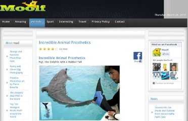 http://www.moolf.com/animals/incredible-animal-prosthetics.html