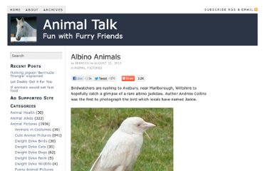 http://www.animaltalk.us/albino-animals/