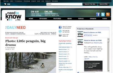 http://www.pbs.org/wnet/need-to-know/the-daily-need/photo-little-penguin-big-drama/6288/