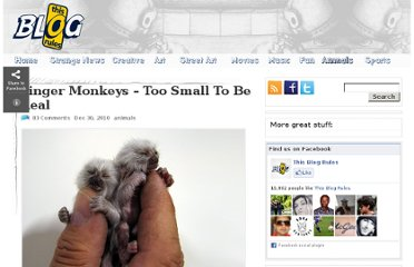 http://www.thisblogrules.com/2010/12/finger-monkeys-too-small-to-be-true.html