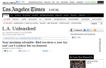 http://latimesblogs.latimes.com/unleashed/2010/09/your-morning-adorable-bird-receives-a-new-toy-and-cant-contain-his-excitement.html