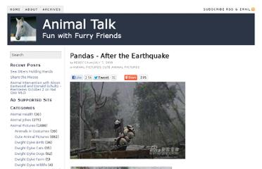 http://www.animaltalk.us/pandas-after-the-earthquake/