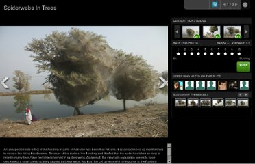http://www.huffingtonpost.com/2011/04/01/spiderwebs-in-trees-pakistan-floods_n_843521.html#s260311&title=Spiderwebs_In_Trees