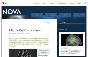 http://www.pbs.org/wgbh/nova/body/map-human-heart.html