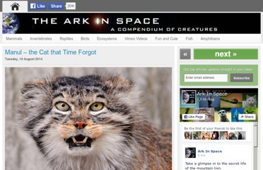 http://www.arkinspace.com/2011/04/manul-cat-that-time-forgot.html
