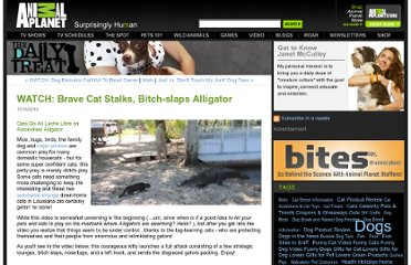 http://blogs.discovery.com/daily_treat/2010/11/watch-brave-cat-stalks-bitch-slaps-alligator.html