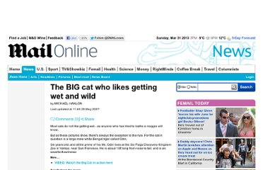 http://www.dailymail.co.uk/news/article-458282/The-BIG-cat-likes-getting-wet-wild.html