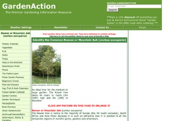 http://www.gardenaction.co.uk/trees/rowan-mountain-ash/sorbus-aucuparia.asp