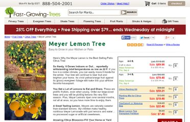 http://www.fast-growing-trees.com/Improved-Meyer-Lemon-Tree.htm