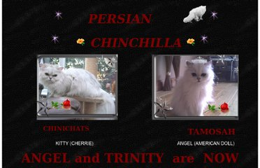 http://sosjoinery.pwp.blueyonder.co.uk/cats/persian_chinchilla.htm