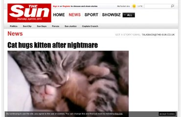 http://www.thesun.co.uk/sol/homepage/news/3605263/Cat-hugs-kitten-after-nightmare.html