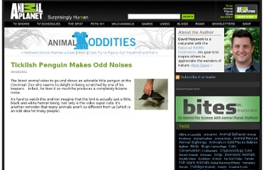http://blogs.discovery.com/animal_oddities/2011/04/ticklish-penguin-makes-odd-noises.html