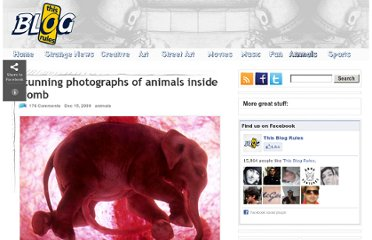 http://www.thisblogrules.com/2009/12/stunning-photographs-of-animals-inside.html