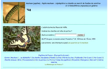http://bernard.langellier.pagesperso-orange.fr/papillons/machaon.htm