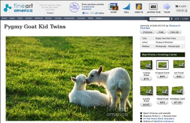 http://fineartamerica.com/featured/pygmy-goat-kid-twins-thomas-r-fletcher.html?newartwork=true
