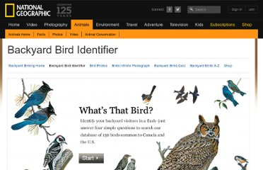http://animals.nationalgeographic.com/animals/birding/backyard-bird-identifier/