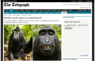 http://www.telegraph.co.uk/news/newstopics/howaboutthat/8615859/Monkey-steals-camera-to-snap-himself.html
