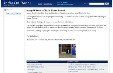 http://www.indiaonrent.com/view/s/seagull-steals-chips-from-store.html