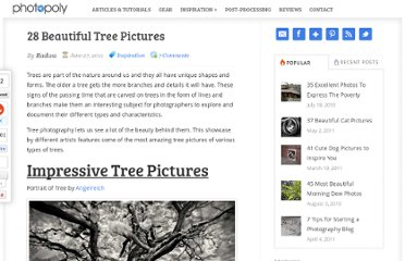 http://www.photopoly.net/28-impressive-tree-pictures/