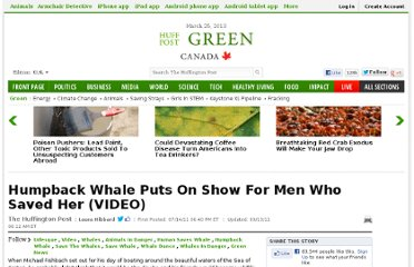 http://www.huffingtonpost.com/2011/07/14/humpback-whale-video_n_898859.html
