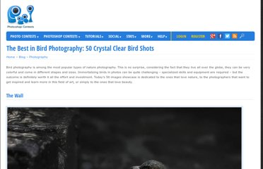 http://www.pxleyes.com/blog/2011/06/the-best-in-bird-photography-50-crystal-clear-bird-shots/