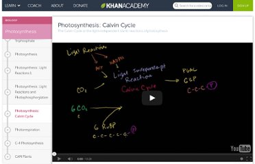 http://www.khanacademy.org/video/photosynthesis---calvin-cycle?playlist=Biology