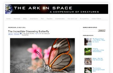 http://www.arkinspace.com/2011/07/incredible-glasswing-butterfly.html
