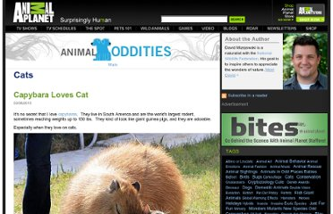 http://blogs.discovery.com/animal_oddities/cats/