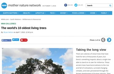 http://www.mnn.com/earth-matters/wilderness-resources/photos/the-worlds-10-oldest-living-trees/taking-the-long-view