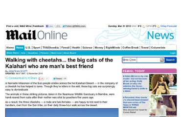 http://www.dailymail.co.uk/news/article-1328911/Walking-cheetahs--big-cats-Kalahari-mans-best-friend.html