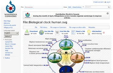 http://commons.wikimedia.org/wiki/File:Biological_clock_human.svg
