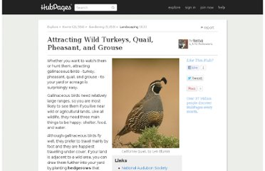 http://kerryg.hubpages.com/hub/Attracting-Wild-Turkeys-Quail-Pheasant-and-Grouse