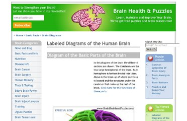 http://www.brainhealthandpuzzles.com/diagram_of_brain.html