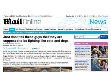 http://www.dailymail.co.uk/news/article-1278441/Wolf-tiger-cubs-brought-form-unique-bond-endangered-species.html