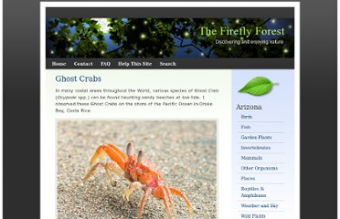 http://fireflyforest.net/firefly/2006/05/30/ghost-crabs/