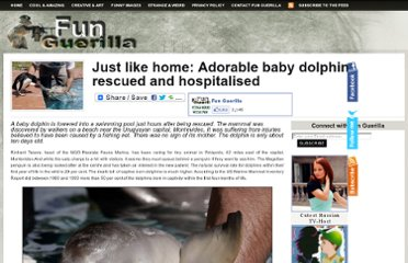 http://funguerilla.com/just-like-home-adorable-baby-dolphin-rescued-and-hospitalised/
