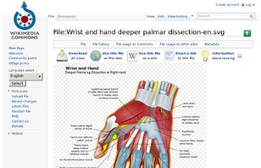 http://commons.wikimedia.org/wiki/File:Wrist_and_hand_deeper_palmar_dissection-en.svg
