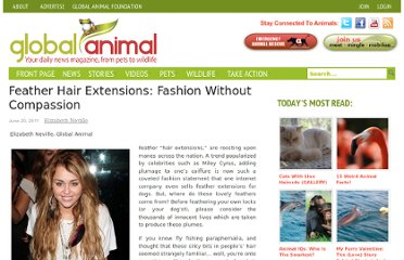 http://www.globalanimal.org/2011/06/20/feather-hair-extensions-fashion-without-compassion/42888/